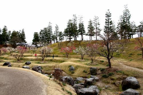 観梅に行きました。 京都府の「けいはんな記念公園」、奈良県の「馬見丘陵公園」