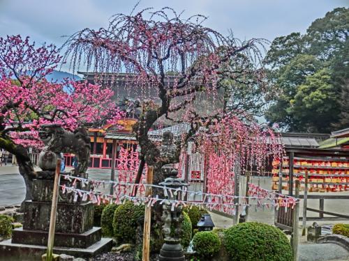 2015春・九州一周ドライブ旅(途中経過報告NO1)