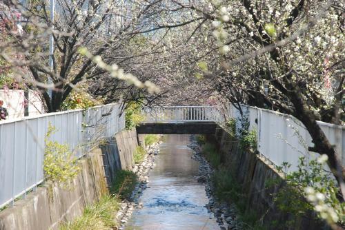 二ヶ領用水の花桃・桜散策(川崎市中原)