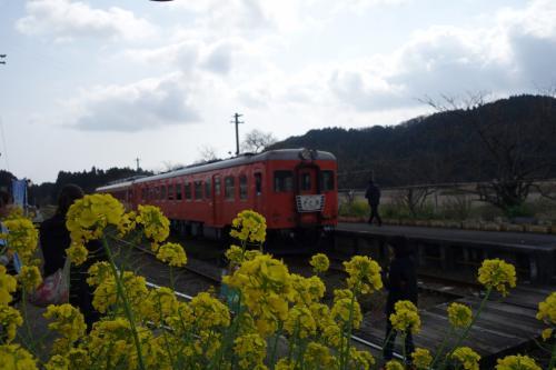 菜の花畑を走るいすみ鉄道と小湊鉄道