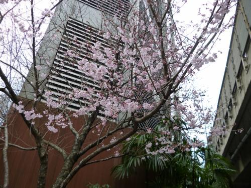東京散歩♪ vol.28 恵比寿・・・桜・桜・桜・・・♪