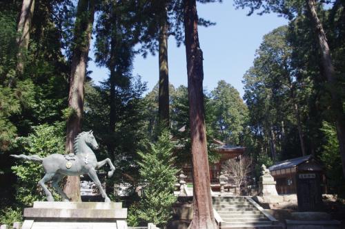 山野草に逢いたくて~瀧樹神社のユキワリイチゲ~2015