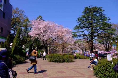 春爛漫 豊島園 −上