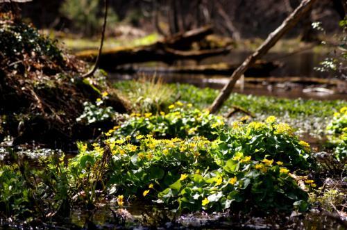 ◆清閑の春・涌井の清水