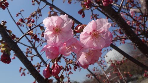 大阪万博 日本庭園散策