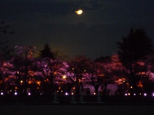 高田城百万人観桜会の3分咲きへ、早々と御邪魔致しました♪(^0^)