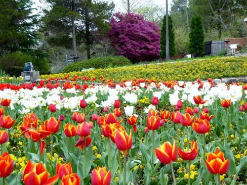 「大阪府立花の文化園」、桜の後には不思議な花が満開・・・