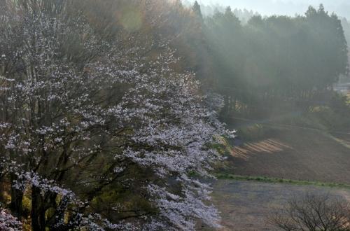 写真好き仲間と宇都宮近郊の桜の撮影会