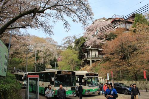 世界遺産・吉野山「桜の名所」人の多さにびっくりで~す