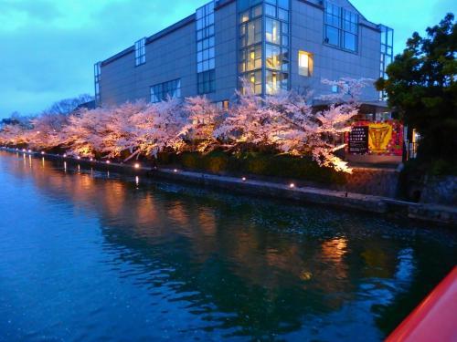 お酒はなくとも 舟には乗らずとも 岡崎の夜桜に酔う