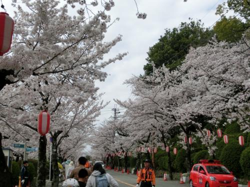 桜満開!の五月山動物園へ行ってみました。念願のあの動物に会いに・・・。