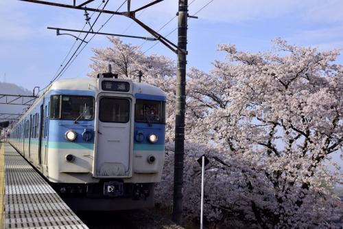 満開な勝沼の桜並木に訪れてみた(試し撮り編)