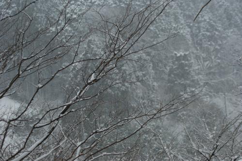 70歳 春を迎えに 一人旅 京都から朽木谷経由湖北へ