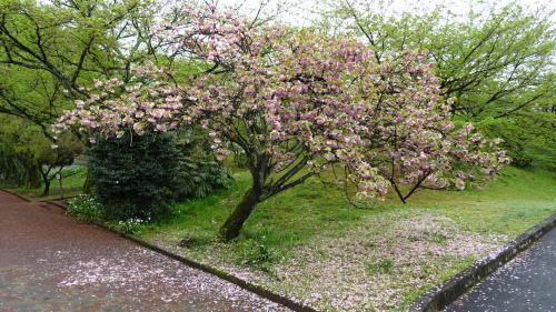淡路島・東四国庭園めぐり(28) 新居浜市 旧広瀬邸の見学