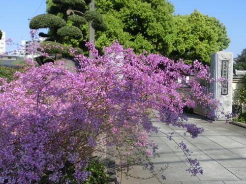 花の寺・西新井大師で105分 ~ スミマセン、まだ花は出て来ません