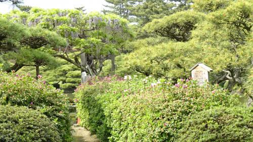 淡路島・東四国庭園めぐり(37) 大名庭園 中津万象園の観賞 中巻