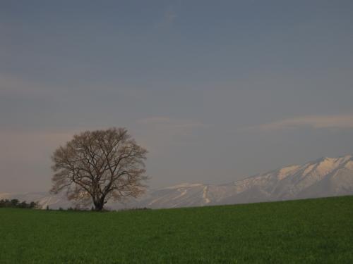 春の小岩井農場