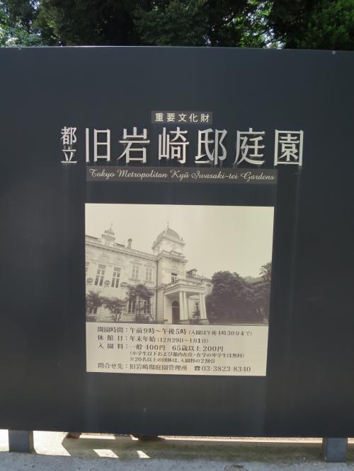 旧岩崎邸庭園のカントウタンポポ