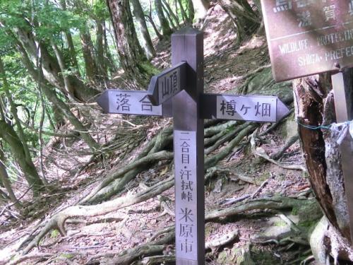 ヤマシャクヤクを求めて 霊仙山に登ってきました