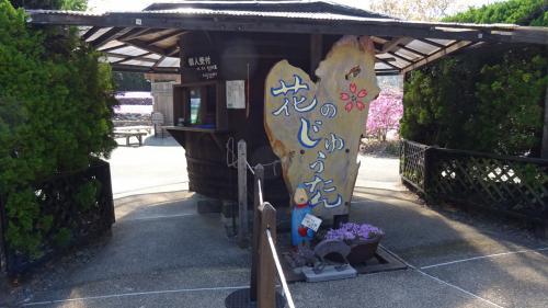 花のじゅうたんを観に永沢寺へ 花のじゅうたん編