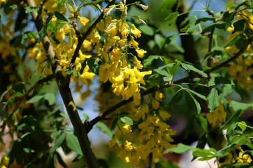 四季折々の花が咲き乱れる花の楽園  あしかがフラワーパーク 下