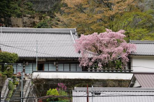 徳蔵寺の枝垂れ桜