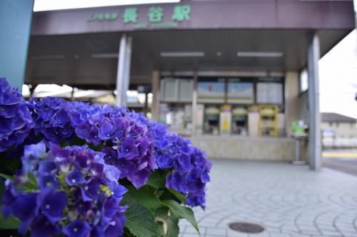 鎌倉の紫陽花を見に訪れてみた(まだちょっと早かった編)