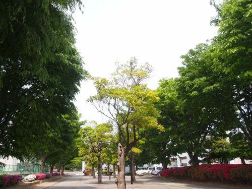 華蔵寺公園に行ってみました