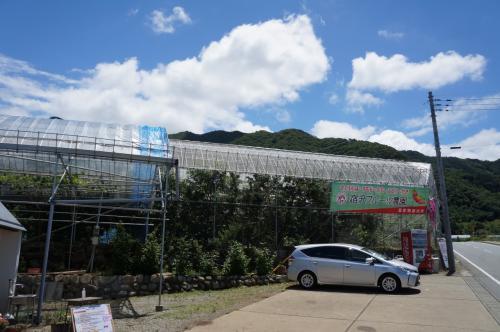 2015.6 さくらんぼ狩り+勝沼ワイナリー巡り⑥