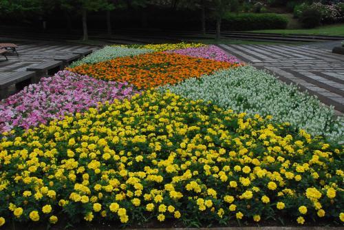 色とりどりの植物が咲き誇る武蔵丘陵森林公園(埼玉)