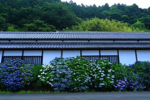 静岡 花めぐり~加茂荘花鳥園、香勝寺、極楽寺