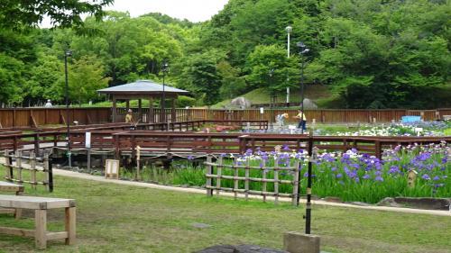 大阪府営 山田池公園の花菖蒲園
