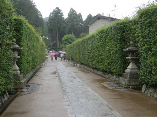 梅雨に映える花「紫陽花」シト・シト・ピチャン・シトピチャン小雨の中、三室戸寺へ