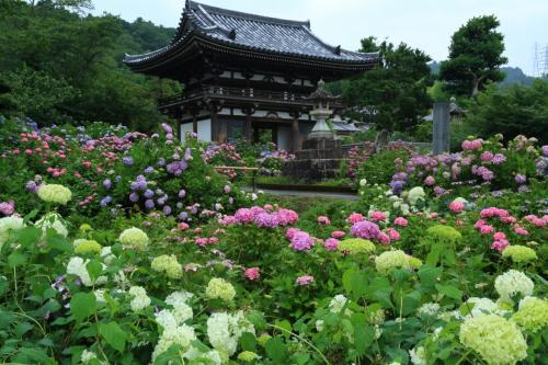 京都 花めぐり~丹州觀音寺、舞鶴自然文化園