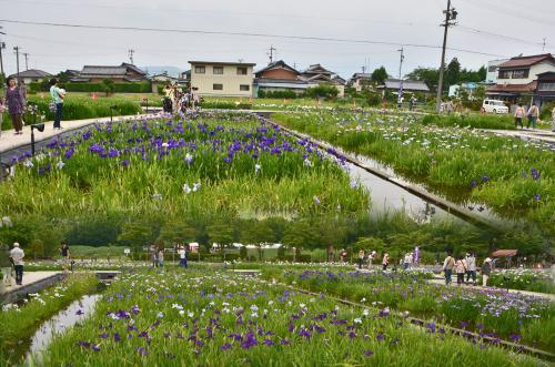 2015 曽根城公園花しょうぶ祭