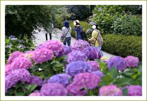 Solitary Journey [1607] もちろん睡蓮と金糸梅もきれいでしたが、ウシガエルはもっと可愛かった^^編<三景園花まつり>広島県三原市