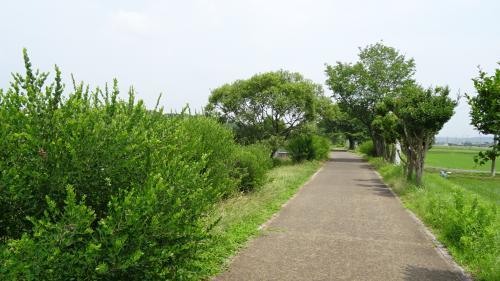 加東市平池公園の睡蓮と大賀蓮