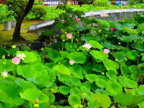 夏本番を迎えた京都のなかでそこはただ静寂と清々しい時間だけが流れる場所