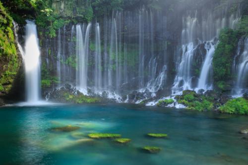 花の色、鳥の色、自然の色を満喫する旅~富士花鳥園・白糸の滝・まかいの牧場・花の都公園~
