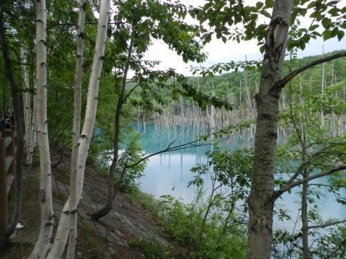 美瑛の『青い池』◆2015初夏の爽やか北海道/花とグルメな旅≪その5≫