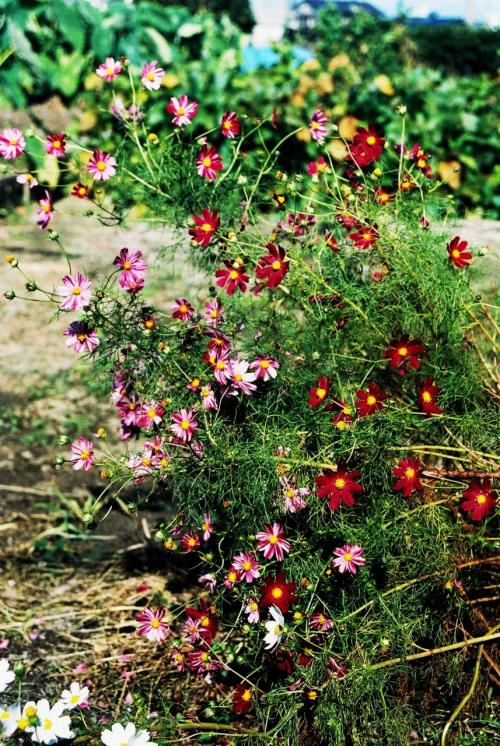 日本の秋、星&花への誘い