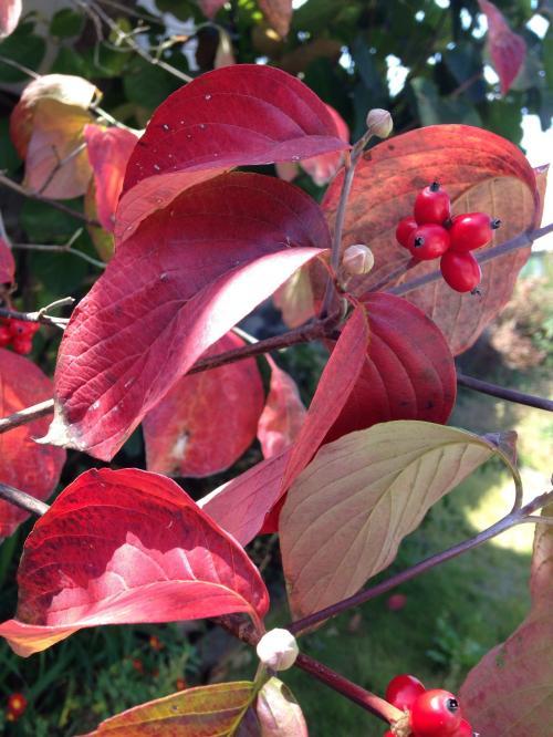 晩秋の奥志賀高原へ♪  初雪を待つばかりか…冬紅葉。。。