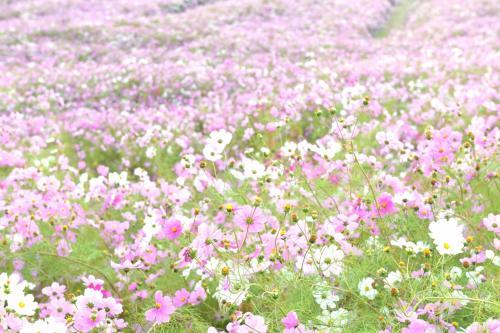 『落差日本一 称名滝』『幻の滝 ハンノキ滝』を行く ☆立山に小さい秋を探しに行ったら、どエライ秋をみ~つけた!☆