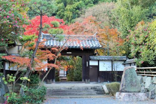 ライトアップに照らされた五重塔が想像以上の美しさ☆紅葉時期の東寺で秋を愛でる♪