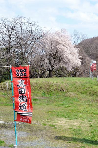 一本桜を探しに、春霞たなびく桜満開の上州路へ・・・人々の営みに寄り添い咲く一本桜 そんな桜に出会えた旅でした。