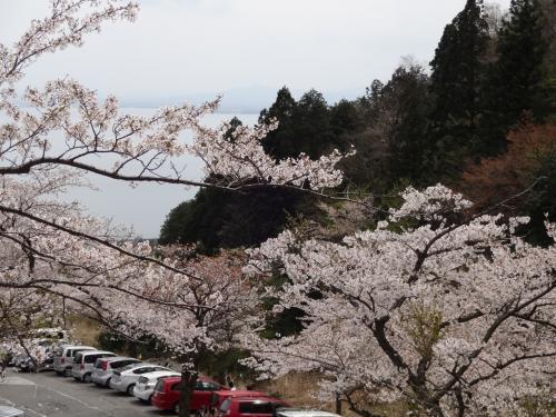 桜舞う海津大崎と琵琶湖バレイ空中散歩