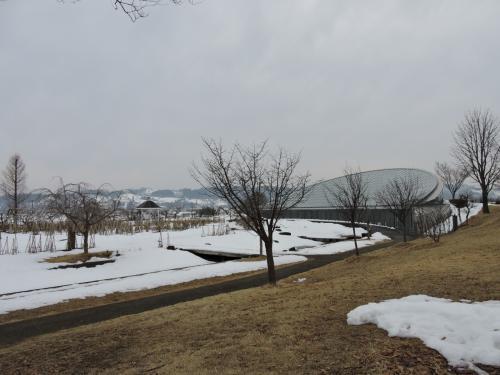 冬の花を見に寒河江に(最上ふるさと公園クリスマスローズ展)