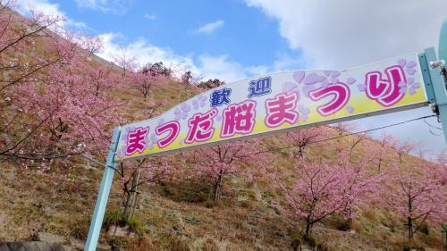 満開の河津桜と菜の花が咲いていた「まつだ桜まつり」と ちょこっと小田原散策