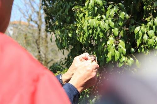 桜sakura旅Part2 愛知県緑化センターで、春の花の観察会に♪