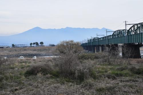 富士川河川敷から眺める富士山・菜の花・鉄道の絶景(静岡)
